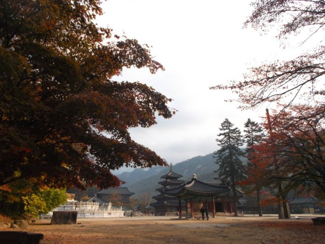 To the left is a large tree with red leaves. In the upper center is white sky, to the right in the distance are some tall pine trees and a couple of trees with red leaves. further in the distance, at ground level, is a wooded shelter for an ancient basin, and further beyond is the wooden pagoda, with mountains in the background.
